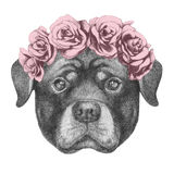 Portrait of Rottweiler with floral head wreath. Stock Image