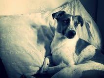 Portrait rustique de chien de repos photos stock