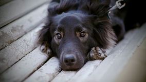 Portrait of sad black dog on the bench Royalty Free Stock Photography