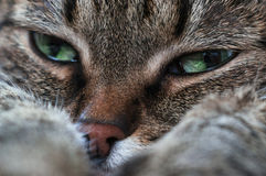 Portrait of a sad cat Royalty Free Stock Photo