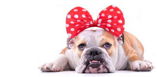 Portrait of sad dog Royalty Free Stock Photos