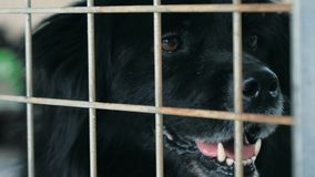 Portrait of sad dog n shelter behind fence waiting to be rescued and adopted to new home. Shelter for animals concept