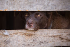 Portrait of a sad dog with sad look in a cage. Portrait of a sad dog with sad look in a box closeup Royalty Free Stock Photography