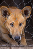 Portrait of a sad dog with sad look in a cage. Closeup Royalty Free Stock Photo