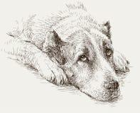 Portrait of a sad dog Stock Image