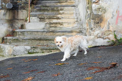 Portrait of a Sad Homeless Dog Stock Photo