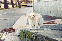 Portrait of a Sad Homeless Dog Royalty Free Stock Images