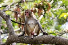 Portrait of the sad monkey. Royalty Free Stock Image