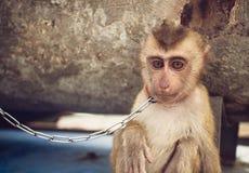 Portrait of the sad monkey Stock Photography
