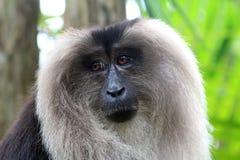 Portrait of the sad monkey Royalty Free Stock Image