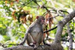 Portrait of the sad monkey. Stock Photo