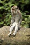 Portrait of the sad monkey Stock Photo