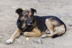 Portrait sans abri de chien Image libre de droits