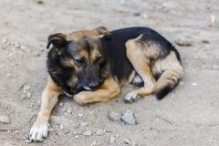 Portrait sans abri de chien Image stock