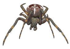 Portrait scary spider. Illustration Stock Illustration