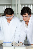 Portrait of science students making an experiment. In a laboratory Royalty Free Stock Photography