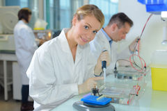 Portrait scientist working at laboratory royalty free stock images