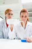 Portrait of scientists doing an experiment Royalty Free Stock Photography