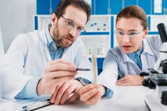 Portrait of scientists in lab coats and eyeglasses looking at flask with reagent at workplace. In lab royalty free stock photos