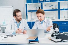 Portrait of scientists in lab coats and eyeglasses working together at workplace with laptop. In lab royalty free stock photography