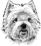 Portrait of a scottish terrier Stock Photos