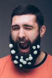 Portrait of screaming young bearded hipster man with flowers in his beard Royalty Free Stock Image