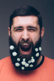 Portrait of screaming young bearded hipster man with flowers Stock Images