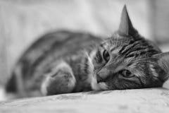 Portrait se trouvant sur le lit d'un chat domestique malade Image libre de droits