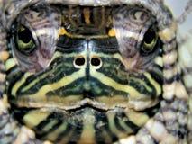 Portrait of a sea turtle Stock Photo