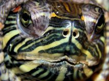 Portrait of a sea turtle Stock Image