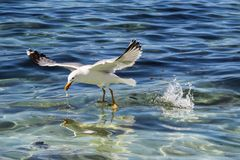 Seagull resting on a lovely sunny day stock image