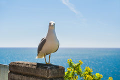 Portrait of a seagull Royalty Free Stock Photos