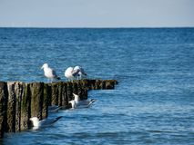 Seagulls over the water royalty free stock photography