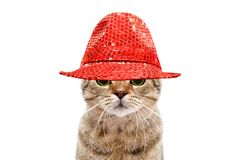 Portrait of a secretive cat in a red hat. On white background stock photography