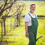 Portrait of a senior gardener. In his garden/orchard (color toned image royalty free stock photography