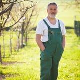 Portrait of a senior gardener Royalty Free Stock Images