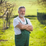 Portrait of a senior gardener. In his garden/orchard (color toned image stock image