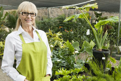 Portrait of a senior gardener in garden center stock image