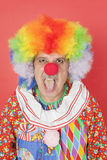 Portrait of senior male clown sticking out tongue over red background Stock Photos