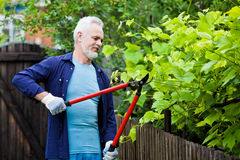 Portrait of senior man gardener pruning an hedge Royalty Free Stock Photo