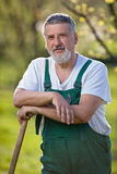 Portrait of a senior man gardening in his garden Stock Image