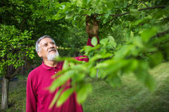 Portrait of a senior man gardening in his garden Stock Photography