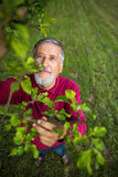 Portrait of a senior man gardening in his garden Royalty Free Stock Photos