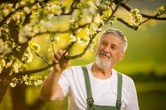 Portrait of senior man gardening Stock Photo