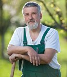 Portrait of a senior man  in his garden Royalty Free Stock Photography
