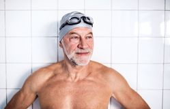 Portrait of a senior man in an indoor swimming pool. royalty free stock photography