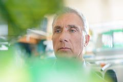 Portrait senior man shot through leaves for blurry effect Royalty Free Stock Images