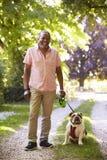 Portrait Of Senior Man Walking Pet Bulldog In Countryside royalty free stock images