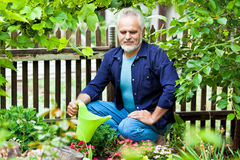Portrait of senior man watering flowers Stock Images