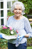 Portrait Of Senior Woman Planting Flowers In Garden. Senior Woman Planting Flowers In Garden Royalty Free Stock Images